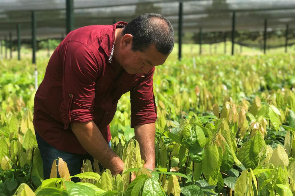 El Guaviare le apuesta a los cultivos de la paz