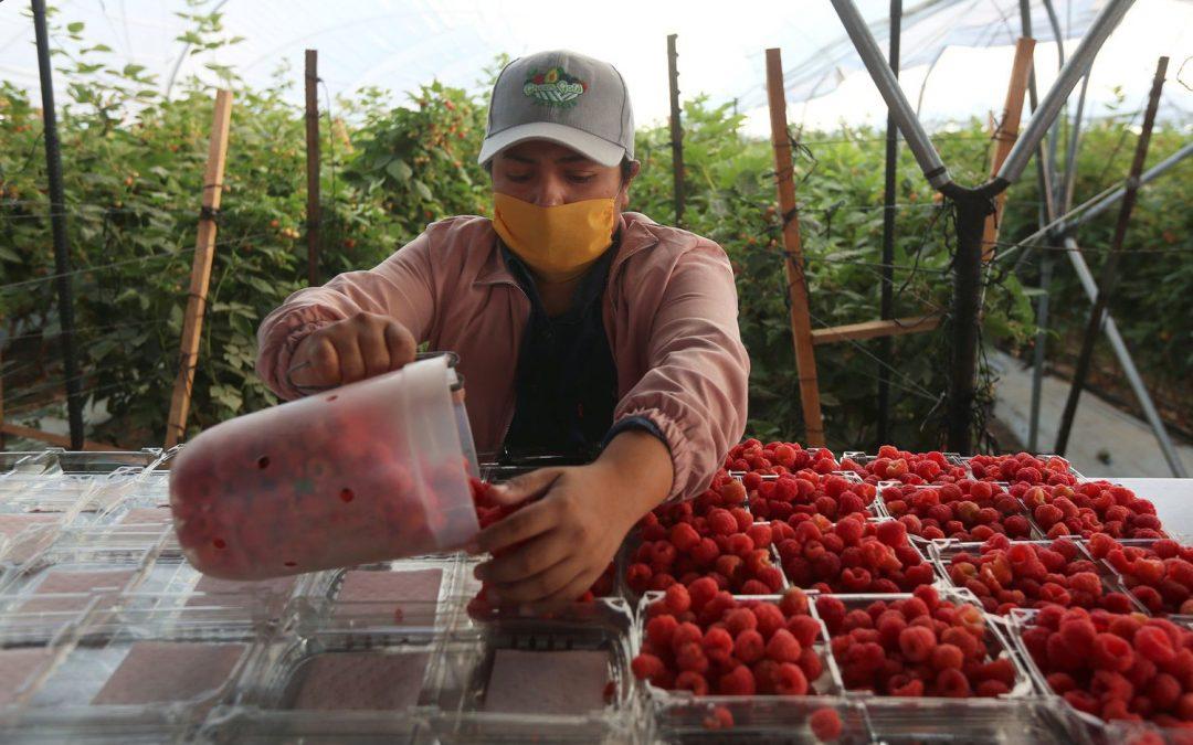 México pierde medio millón de empleos en abril por la crisis del coronavirus